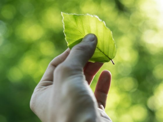mapping cleantech greentech france